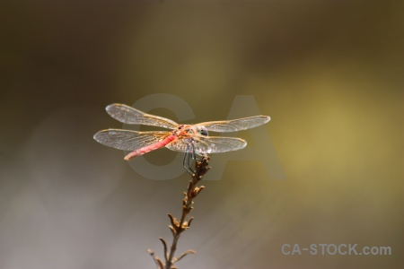 Branch dragonfly europe animal spain.
