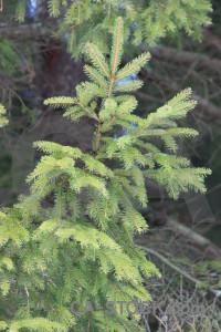 Branch green.
