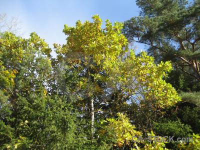 Branch green leaf tree.