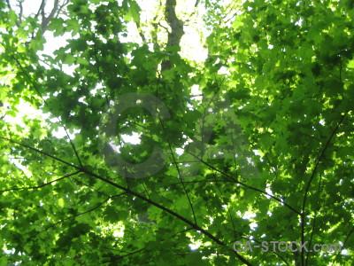 Branch leaf green.