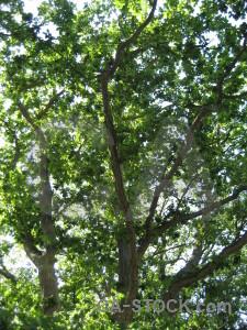 Branch leaf green tree.