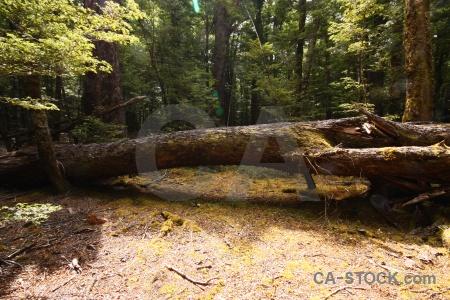 Branch leaf lake sylvan trek south island tree.
