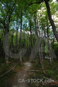 Branch patagonia argentina tree path.