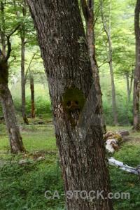 Branch plant el chalten south america forest.
