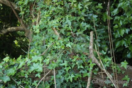 Branch tree leaf green.