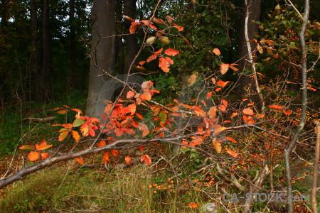 Branch tree leaf green brown.