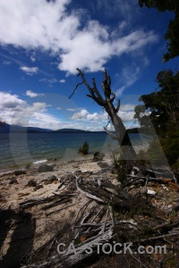 Branch tree south island lake manapouri.