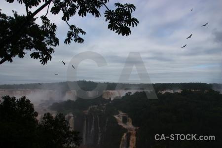 Brazil river iguacu falls animal spray.