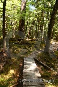 Bridge leaf lake sylvan trek dead path.
