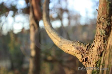 Brown branch tree.