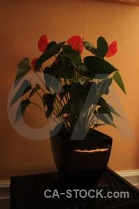 Brown flower orange pot plant.