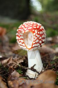 Brown green fungus mushroom toadstool.