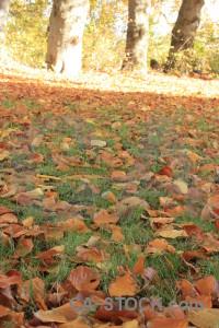Brown ground green orange yellow.