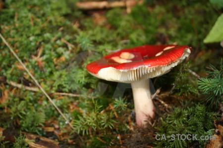 Brown mushroom toadstool green fungus.