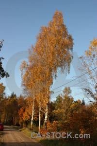 Brown orange path tree.