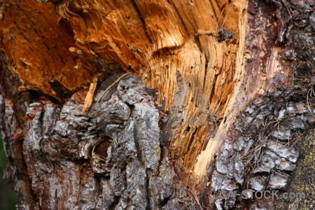 Brown orange texture wood bark.