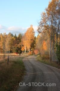 Brown orange tree path.
