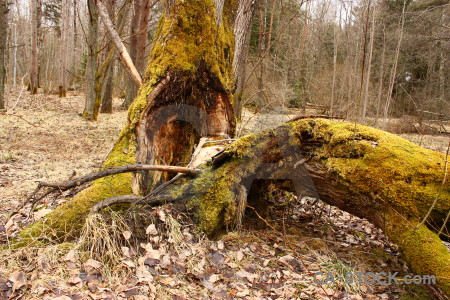 Brown orange yellow tree stump.