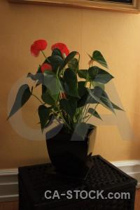 Brown plant pot flower orange.