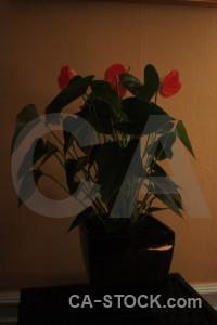 Brown pot plant flower.