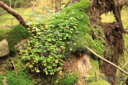 Brown stump green tree.