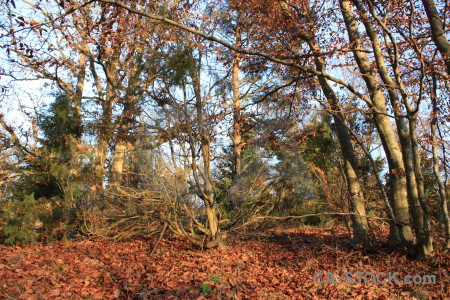 Brown tree forest orange leaf.