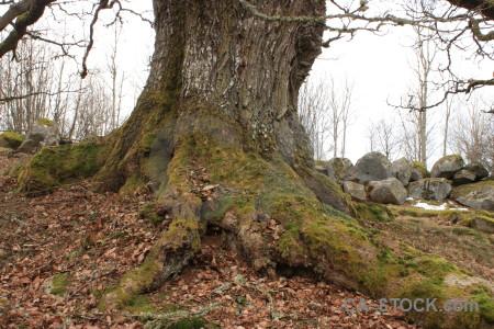 Brown white root single tree.