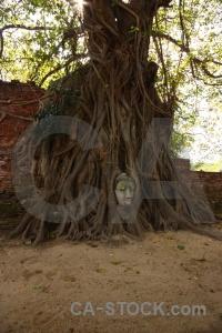 Buddha head buddhist asia root.