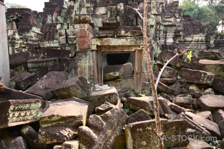 Buddhism ruin buddhist fungus tree.