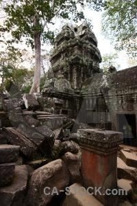 Buddhism siem reap buddhist tree stone.