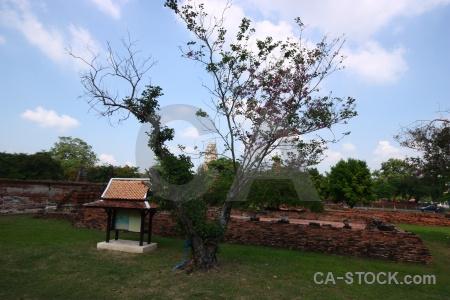 Buddhism temple brick buddhist grass.