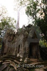 Buddhist fungus ta prohm siem reap ruin.