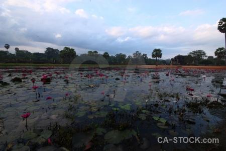 Buddhist siem reap water angkor temple.