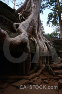 Buddhist single ta prohm unesco ruin.