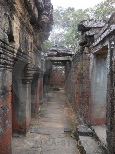 Buddhist sky fungus buddhism tree.