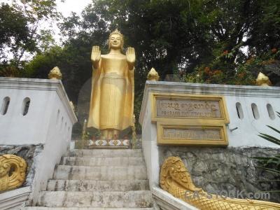 Buddhist tree phousi mount buddhism.