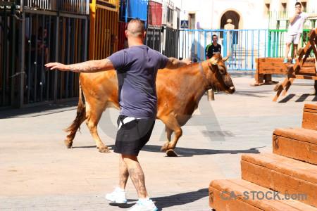 Bull animal bull running white orange.