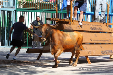 Bull animal spain orange javea.