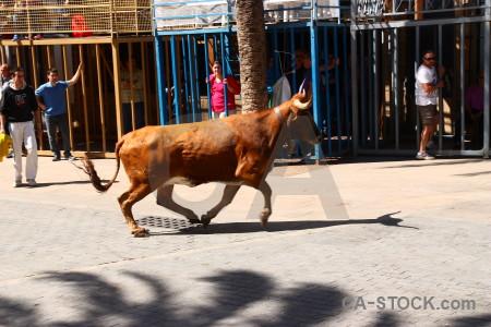 Bull bull running animal horn spain.