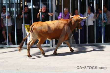 Bull horn animal europe person.