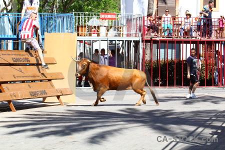 Bull javea person horn europe.