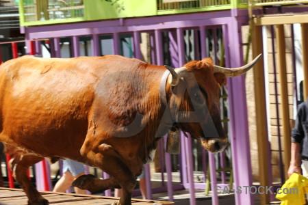 Bull orange europe spain bull running.