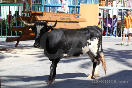 Bull running animal white horn europe.
