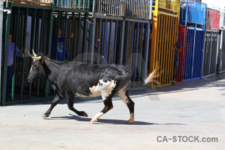 Bull running blue bull horn person.