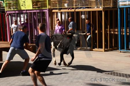 Bull running europe javea spain bull.