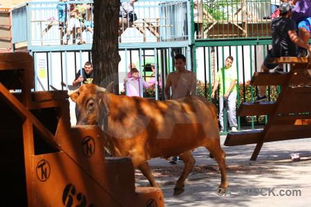 Bull running orange bull europe person.