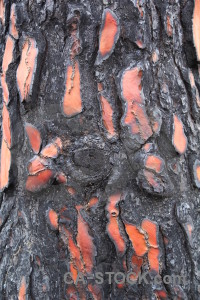 Burnt bark spain javea texture.