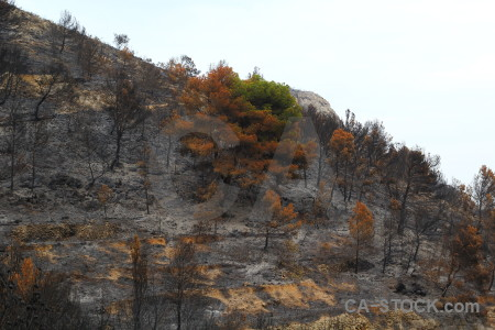 Burnt javea tree montgo fire europe.