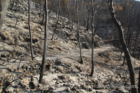 Burnt montgo fire spain ash branch.
