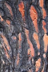 Burnt texture javea spain wood.